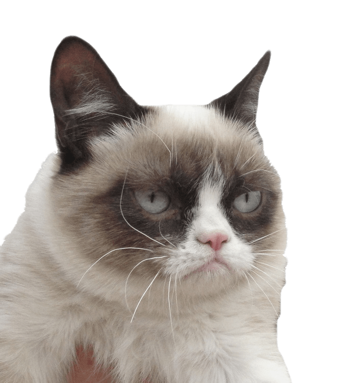Grumpy Cat I Dare You | PNGlib - Free PNG Library